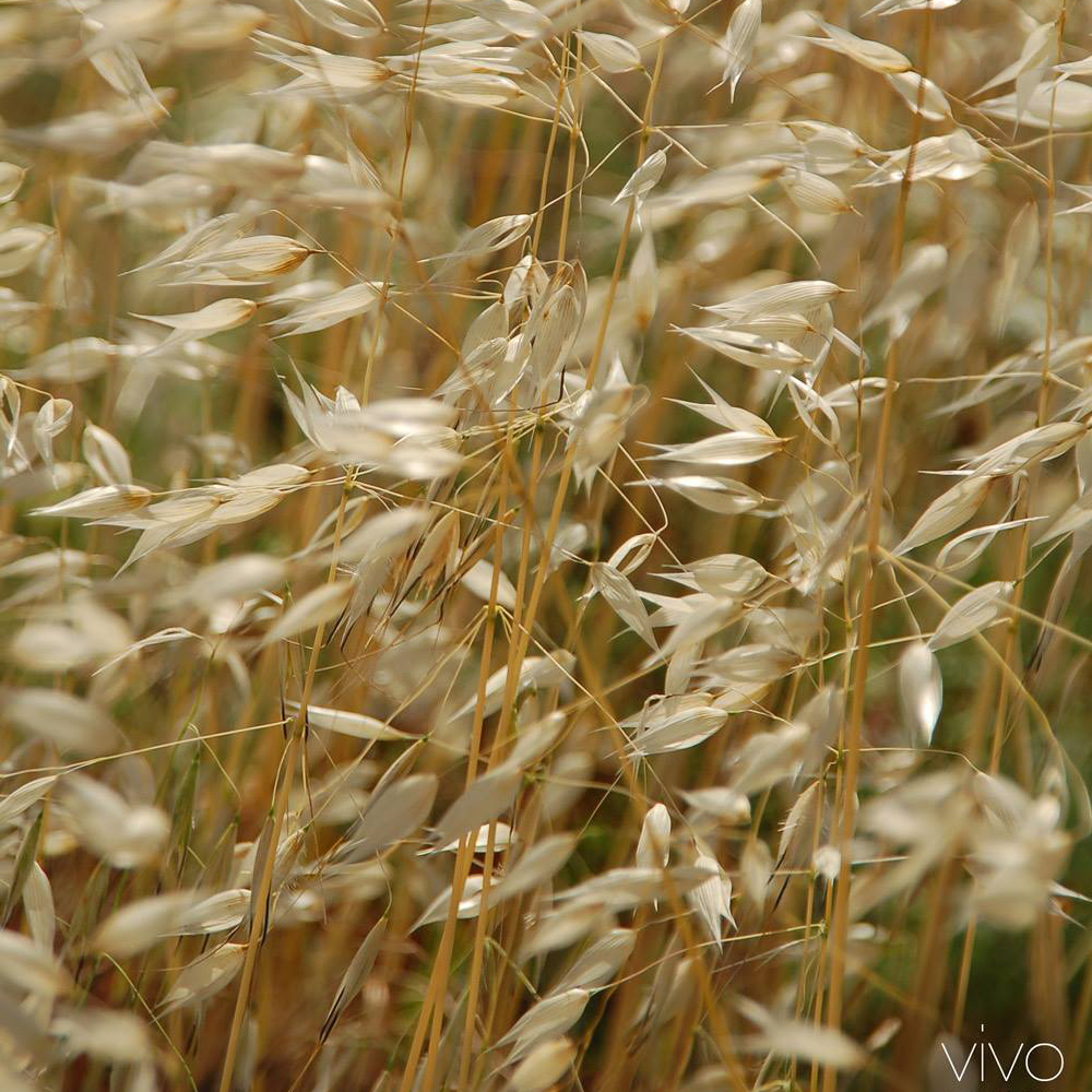 Photo of cereals by vivo